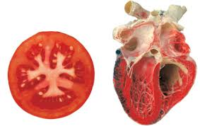 tomat ja süda 2