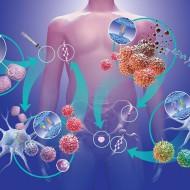 Hoolimata püsivatest müütidest nagu oleks vähk geneetiliselt ettemääratud ehk midagi, millest pole pääsu, on teaduse andmetel vaid 5-10 % vähkkasvajatesse haigestumisest seotud geneetikaga. Mis tähendab, et ülejäänud haigestumised on seotud ennekõike geenidest mittesõltuvate faktoritega nagu toitumine, elustiil, keskkond ja stress. Kuigi kõrgtehnoloogiline skriinimine, protseduurid, medikamendid ja uuringud peaksid viitama sellele, et kaasaegse meditsiini vähivastane sõda […]